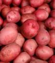 Patatas Rojas Eco