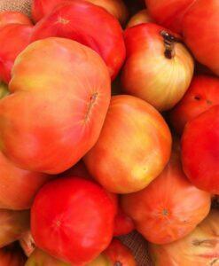 Organic Huevo de Torro Tomatoes