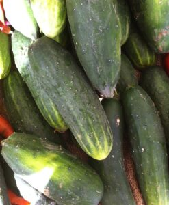 Pepino Local Eco