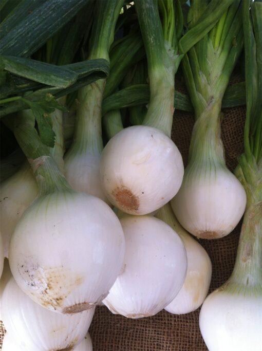 Cebolla Fresca Eco