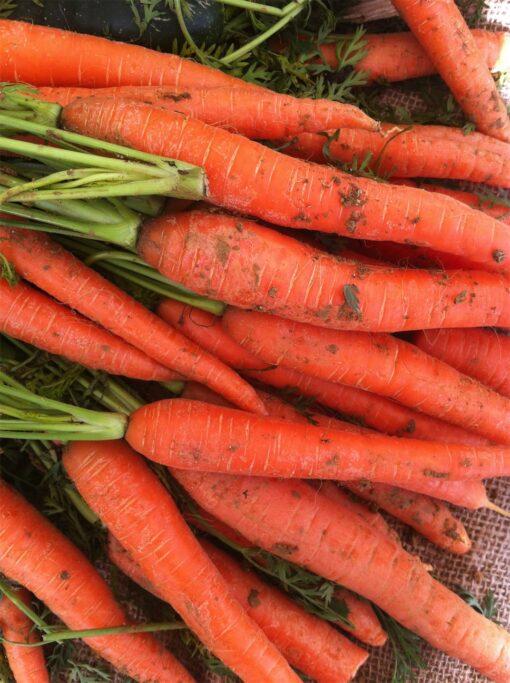 Zanahorias Eco