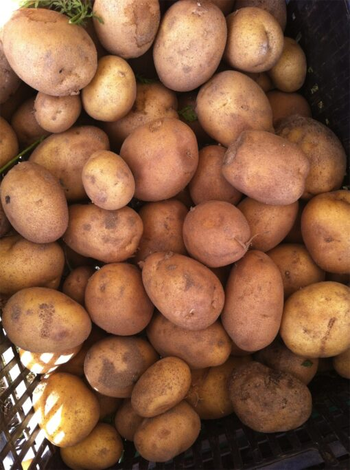 Patatas Eco