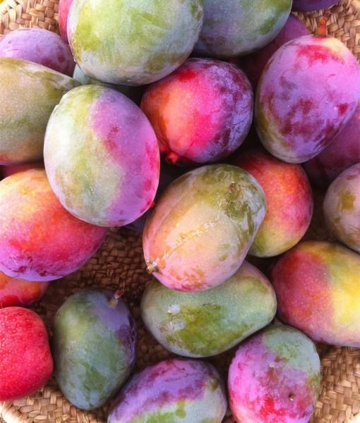 Mangos Ecologicos