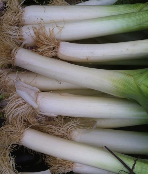 Organic Leek