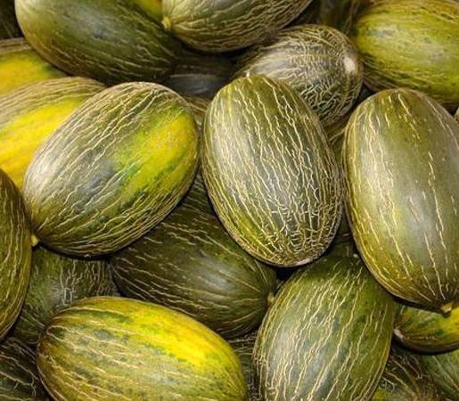 Organic Toad Skin Melon