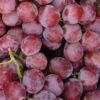 uva-ecologica