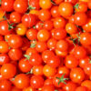 tomates-cherry-ecologicos