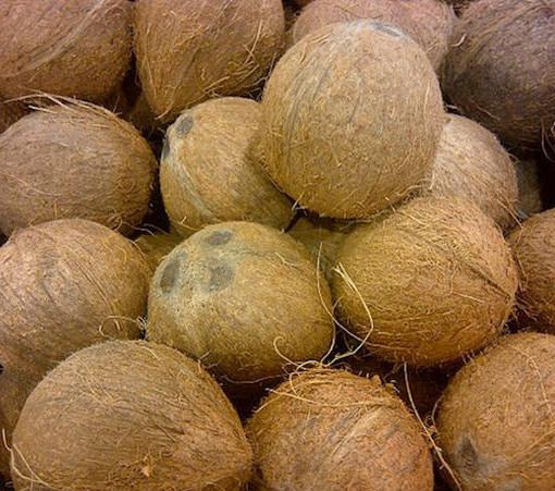 Coco Ecológico